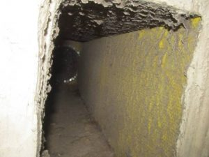Mold Inspection Services